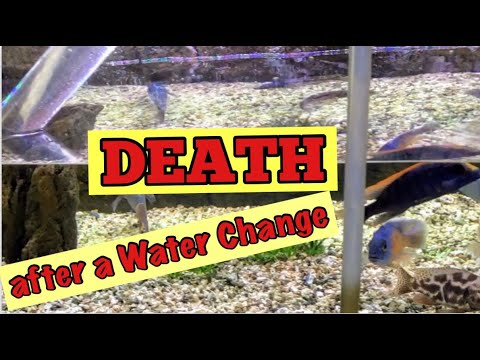 My 3 Tips For [Fish Death And Stress Immediately After A Water Change] ***What Can We Do?***