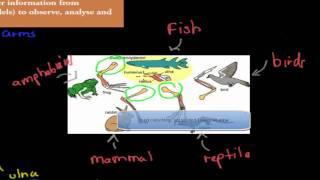 5. Vertebrate forelimbs (HSC biology)