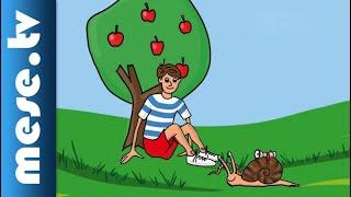 Kék Katica - Csiga Zsiga (gyerekdal, animáció) | MESE TV