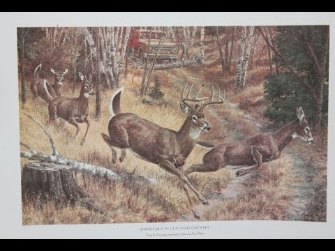 Rainy River Deer Hunting Trip 2015