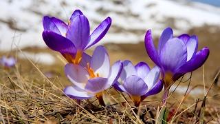 день Весеннего Равноденствия (Пасха, Масленица, Навруз)