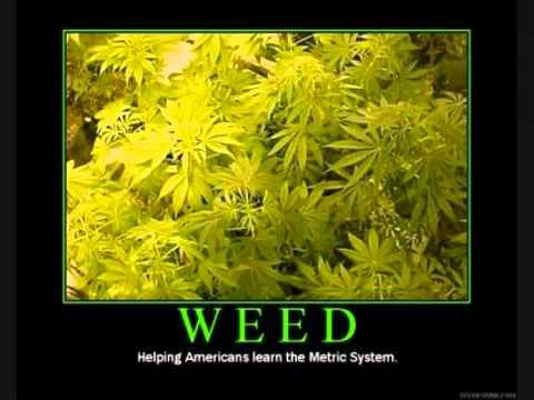 Come lerba   Rasta ciccio Fumo tanta erba