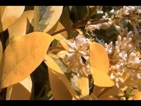 polen de avellano de YouTube · Alta definición · Duración:  3 minutos 14 segundos  · Más de 1.000 vistas · cargado el 26.01.2014 · cargado por davidozz100
