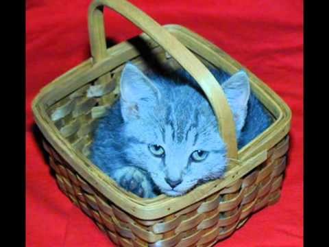 Jimmy Boyd & Gayla Peevey - Kitty In A Basket