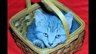 Jimmy Boyd & Gayla Peevey - Kitty In A Basket