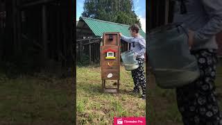 Автоматическая кормушка для кур своими руками