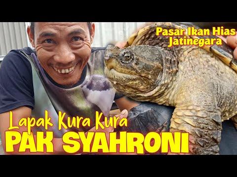 LAPAK KURA KURA PAK SYAHRONI - Pasar Ikan Hias Jatinegara
