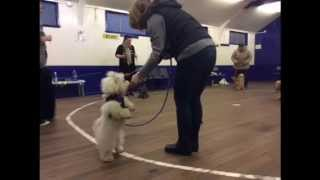 Puppy School Glasgow & D.o.g Dog Training, Clicks & Tricks Training Class