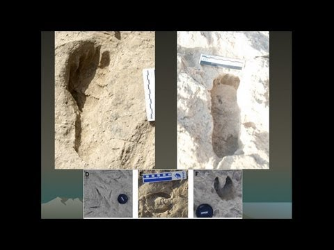 CARTA: Bipedalism and Human Origins--Brian Richmond:Pleistocene Footprints and Human Bipedalism