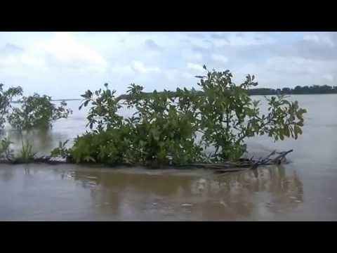The Critically Endangered Irrawaddy Dolphins of the Mekong River (Full Length)