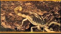 Arizona Exterminating - Commercial