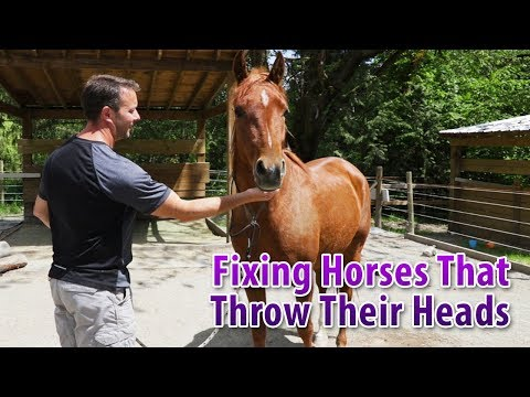 Fixing A Horse That Tosses Their Head Or Throws Their Head