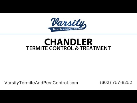 Chandler Termite Inspections & Treatment By Varsity