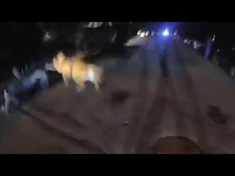 St  Paul Police K9 Accidently Bites Bystander