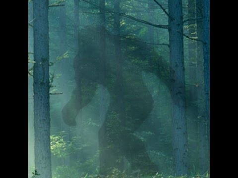 Talk Bigfoot Radio Ep 10 E TX Bigfoot Encounters with Jeff Cryptohulk Stewart and James Hendrix
