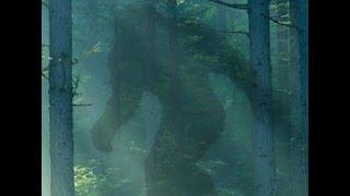 Talk Bigfoot Radio Ep 10 E TX Bigfoot Encounters with Jeff Cryptohulk Stewart and James Hendrix