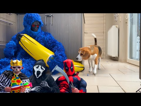 Funny Dogs get PRANKED with Scary Halloween Costumes.
