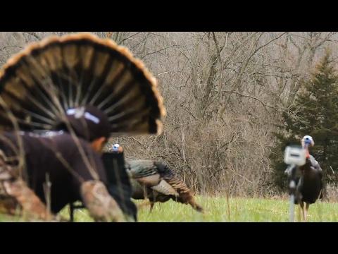 Turkey Hunting 101: Decoys
