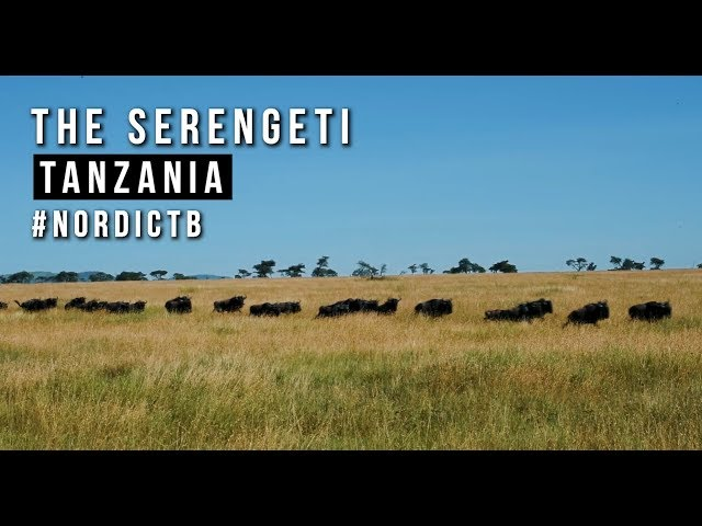On Safari with Four Seasons Serengeti, Tanzania #NordicTBinTanzania
