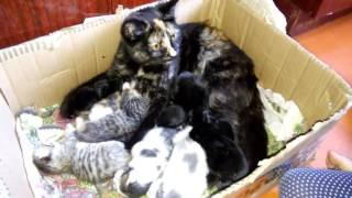 Кошка кормит и котят и крольчат