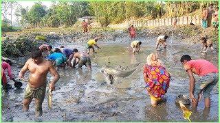 People Catching & Traditional Fishing Village Pond । Amazing Fish Catching Process । Village Life