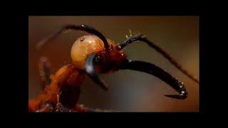 Войны насекомых. Документальные фильмы про животных 2016 HD