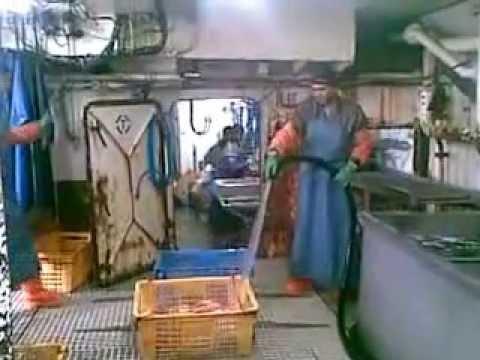 Hauling Traping Crab - Bering Sea King Crab Fishing