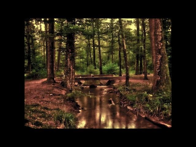 ASMR PL - Bajka na dobranoc dla dorosłych - ASMR po polsku. Relaks, medytacja, las, śpiew ptaków.