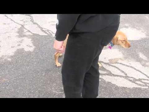 Pathways of Healing New Mexico - Transport Movie - October 25, 2013 - SHEBA