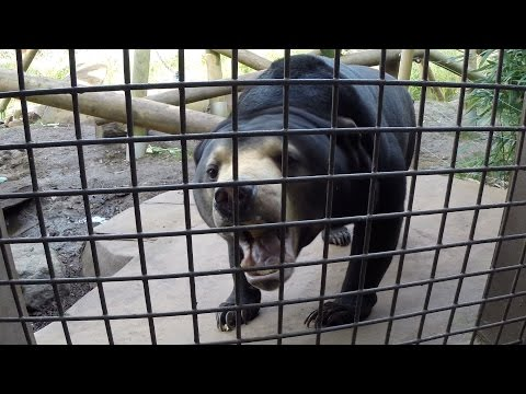Repeat Paul & Lynsey's Zoo Tour #5 Colchester Zoo - SUN BEAR