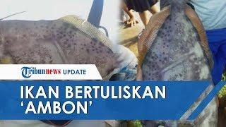 Heboh Ikan Bertuliskan 'Ambon' dan 'Maluku', LIPI Ambon Menduga Ada Koran yang Menempel