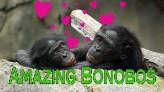 Bonobo Apes: the Sexy Primates