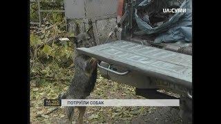 На вулиці Миргородській у Сумах потруїли собак