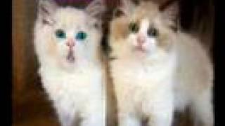 "Rossini's ""Cats Duet"" (animation)"