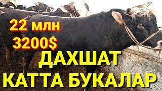 ШАХИДОН 2019 г. МОЛ БОЗОР НАРХЛАРИ