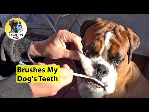Brushing Your Dogs Teeth