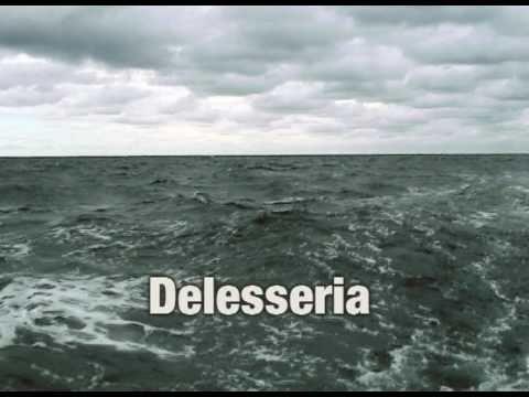 Delesseria
