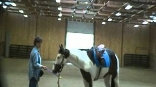 Introduction To Clicker Training The Horse