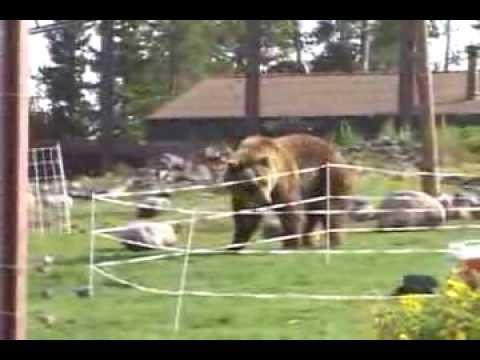 Электроизгородь для медведей