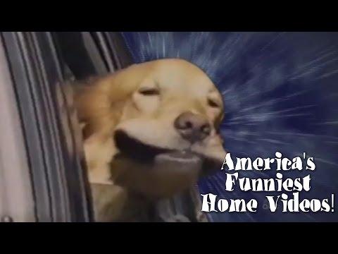 AFV Part 319 - Season 24 (Funny Clips Fail Montage Compilation)