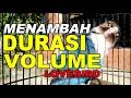 Cara Menambah Durasi Dan Volume Lovebird  Mp3 - Mp4 Download