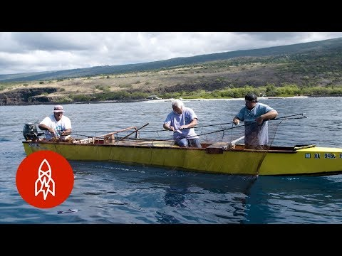 Fishing And Eating Like Ancient Hawaiians