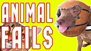 failarmy animals