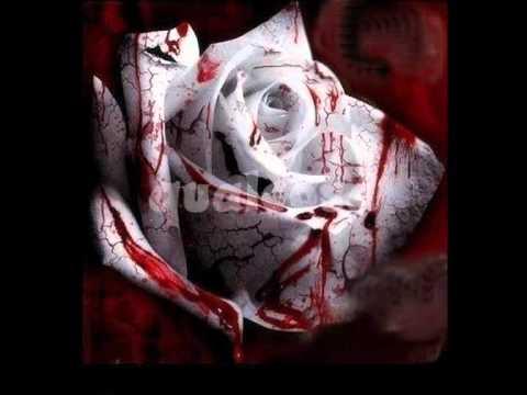 TIMORIA  Sangue impazzito  Testo