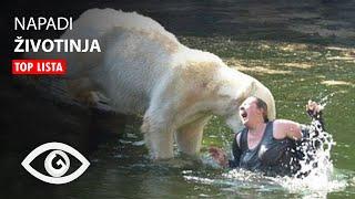 TOP 10: Napadi Zivotinja U Zooloskim Vrtovima