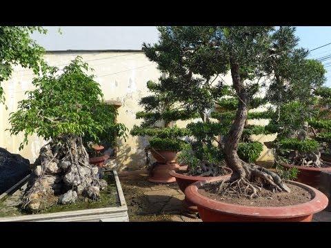 Vườn cây cảnh Dốc Mơ, Đồng Nai và nghệ nhân Đinh Văn Biên