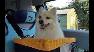 Small Dog Pet Booster Car Seat Safety Travel ตะกร้าน้องหมา ที่นั่งปลอดภัยในรถ ไปไหนไปด้วย คนรักสุนัข
