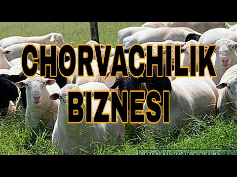 CHORVACHILIK BIZNESI