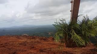 antar bibit sawit di puncak bukit