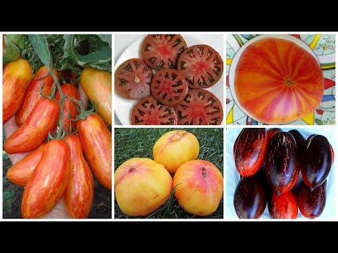 «Томат-персик», «Томат-дерево», «Томат-мясо»: более 20 новых и необычных сортов в нашей коллекции!